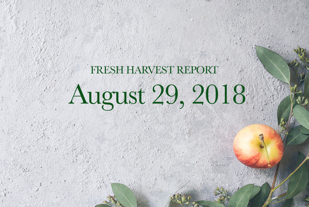 8/29/18 Fresh Harvest Report